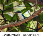 the birds  collared kingfisher  ... | Shutterstock . vector #1309041871