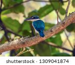 the birds  collared kingfisher  ... | Shutterstock . vector #1309041874