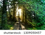 sunbeam in forest at viking...   Shutterstock . vector #1309050457