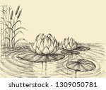 Water Lily On The Lake Vector...