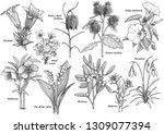 wildflower collection ... | Shutterstock .eps vector #1309077394