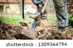 Small photo of Worker digs soil with shovel in colorfull garden, workers loosen black dirt at farm, agriculture concept autumn detail. Man boot or shoe on spade prepare for digging.