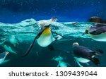 Emperor Penguins Swimming In...
