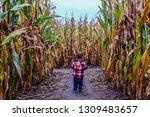 Boy Lost In A Spooky Corn Maze...