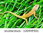 Chameleon On The Leaf.