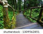 wooden bridge walkway in...   Shutterstock . vector #1309562851