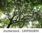 sunlight throught green moss on ...   Shutterstock . vector #1309562854