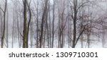 panorama of winter forest with... | Shutterstock . vector #1309710301
