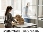 sad dog on medical table and... | Shutterstock . vector #1309735507