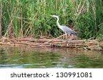 heron in albufera natural... | Shutterstock . vector #130991081