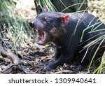 closeup portrait of the angry... | Shutterstock . vector #1309940641
