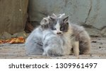 Stock photo three stray little kittens are cold outside 1309961497