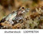 frog in terrarium | Shutterstock . vector #130998704