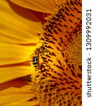 Small photo of Bine or wasp on each an insect in a sunflower. partial picture macro
