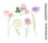 watercolor hand painted... | Shutterstock . vector #1309999594
