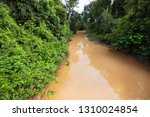 typical rain forest river...   Shutterstock . vector #1310024854
