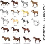 Stock vector horse breeds set various stallion animal gallop and draught horse vector illustration 1310075914