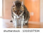 cat drink water on the table at ... | Shutterstock . vector #1310107534