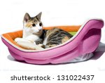 Stock photo cat resting 131022437