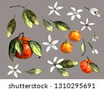 mandarin on a gray background.... | Shutterstock . vector #1310295691