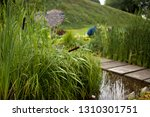 bulrushes  or cattails  on a... | Shutterstock . vector #1310301751