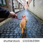 Stock photo a point of view image of a dog walker taking his pet labrador retriever for a walk on a lead along 1310363584