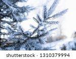 detail of winter frozen pine... | Shutterstock . vector #1310379994