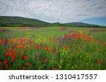 spring flowers in field....   Shutterstock . vector #1310417557