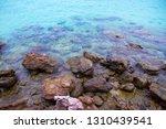 beach rock summer blue sea coast   Shutterstock . vector #1310439541