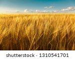 Wheat Field On A Sunny Summer...