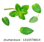 flying mint leaves isolated on... | Shutterstock . vector #1310578814