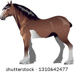 Clydesdale Horse    Animal  ...