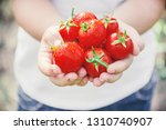 child collects a harvest of... | Shutterstock . vector #1310740907