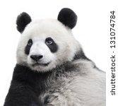 Panda Bear Isolated On White...