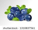 blueberries on transparent... | Shutterstock .eps vector #1310837561