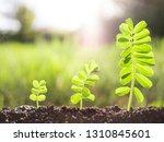 green seedling plants growing | Shutterstock . vector #1310845601