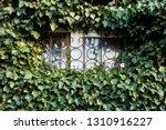 ivy is the usual decoration of... | Shutterstock . vector #1310916227