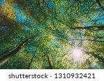 spring summer sun shining... | Shutterstock . vector #1310932421