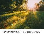 sunset or sunrise in forest... | Shutterstock . vector #1310932427