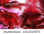 coconut palm tree on summer... | Shutterstock . vector #1311015071