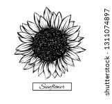sunflower isolated on white... | Shutterstock .eps vector #1311074897