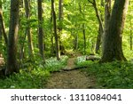 path in a forest | Shutterstock . vector #1311084041