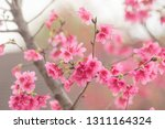 chinese red cherry blossom... | Shutterstock . vector #1311164324