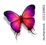 Red Violet Butterfly   Isolate...