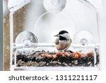 closeup of chickadee bird... | Shutterstock . vector #1311221117
