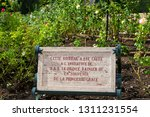 fontvieille   principality of... | Shutterstock . vector #1311231554