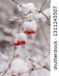 vertical winter background  red ... | Shutterstock . vector #1311245507