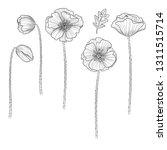 vector poppy. floral botanical... | Shutterstock .eps vector #1311515714