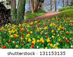 colorful tulips in the park.... | Shutterstock . vector #131153135