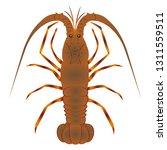 a spiny lobster | Shutterstock .eps vector #1311559511